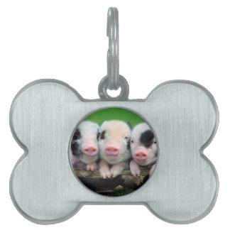Three little pigs - cute pig - three pigs pet tag