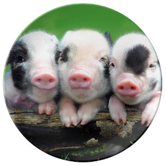 Three little pigs - cute pig - three pigs plate