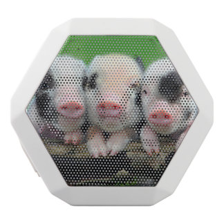 Three little pigs - cute pig - three pigs white bluetooth speaker