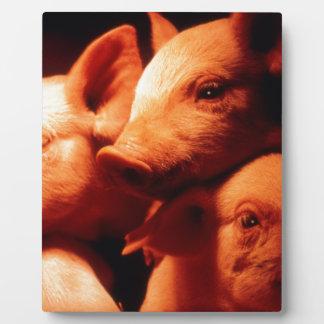 Three Little Pigs Display Plaque