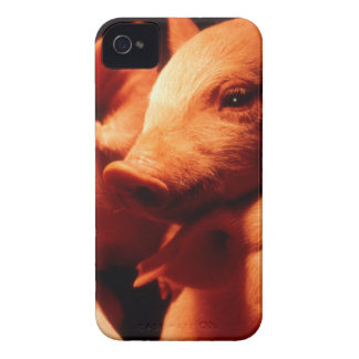 Three Little Pigs iPhone 4 Case-Mate Case