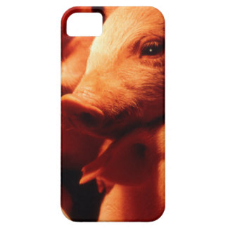 Three Little Pigs iPhone 5 Case