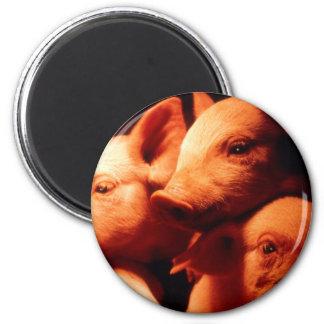 Three Little Pigs Magnet