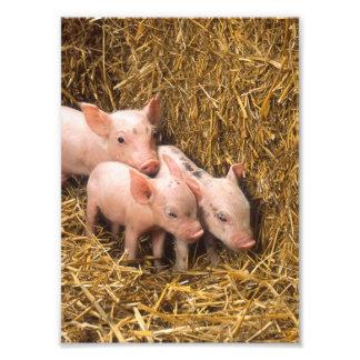 Three Little Pigs Photo Art