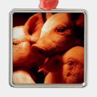 Three Little Pigs Silver-Colored Square Decoration