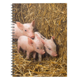 Three Little Pigs Spiral Note Book