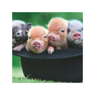 Three little pigs - three pigs - pig hat canvas print
