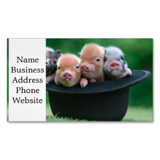 Three little pigs - three pigs - pig hat Magnetic business card