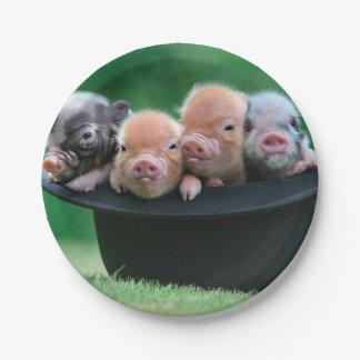 Three little pigs - three pigs - pig hat paper plate