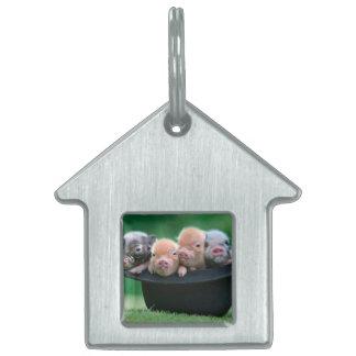 Three little pigs - three pigs - pig hat pet tag