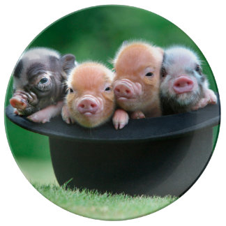Three little pigs - three pigs - pig hat plate