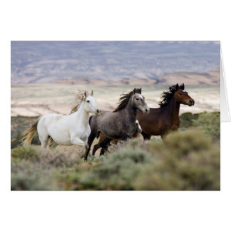 Three Mares Running Wild Horse Greeting Card