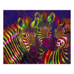 three neon zebras print