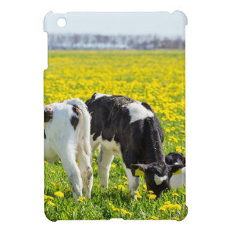 Three newborn calfs in spring dandelions meadow cover for the iPad mini