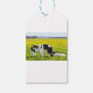 Three newborn calfs in spring dandelions meadow gift tags