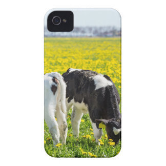 Three newborn calfs in spring dandelions meadow iPhone 4 covers