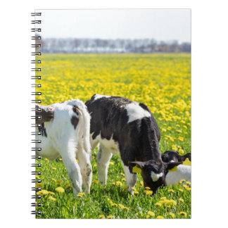 Three newborn calfs in spring dandelions meadow notebooks