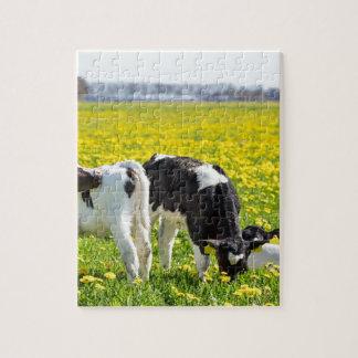 Three newborn calfs in spring dandelions meadow puzzles