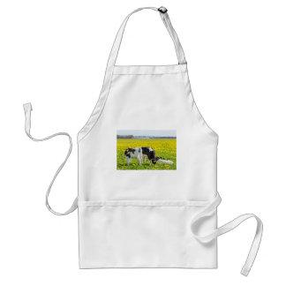 Three newborn calfs in spring dandelions meadow standard apron