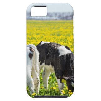 Three newborn calfs in spring dandelions meadow tough iPhone 5 case