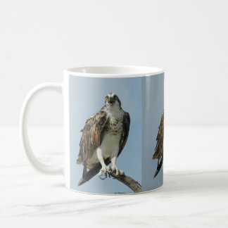 Three Osprey hawk images Coffee Mug