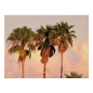 Three Palm Trees Bathed in Warm Sunset Poster