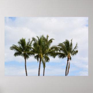 Three Palm Trees Print