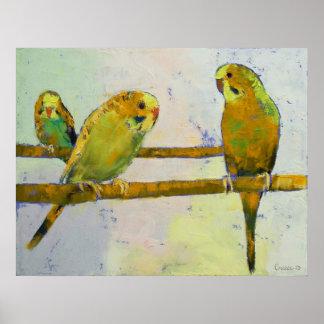 Three Parakeets Print