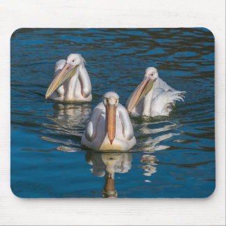 Three pelicans mousepad