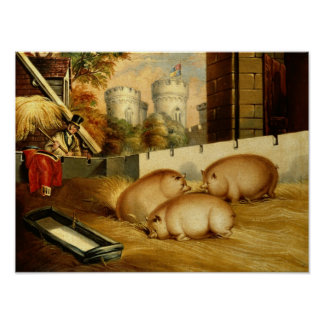 Three Pigs with Castle in the Background Posters
