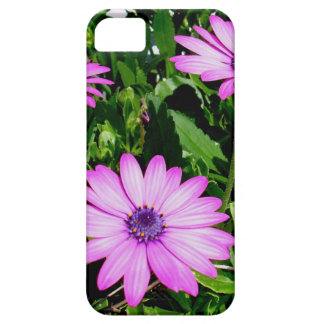 Three Pink Daisy Flowers iPhone 5 Cover