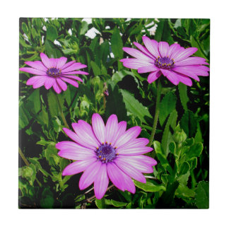 Three Pink Daisy Flowers Tile