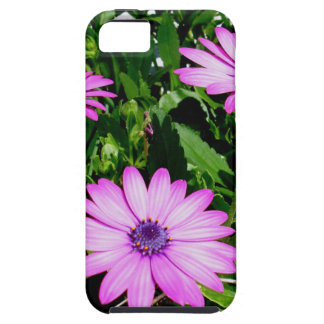 Three Pink Daisy Flowers Tough iPhone 5 Case