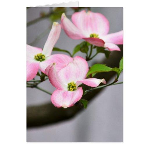 Three Pink Dogwood Flowers Cards