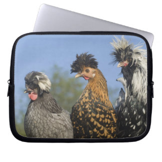 Three Polish Chickens - Laptop Computer Sleeves