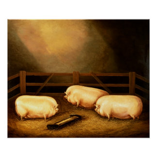 Three Prize Pigs outside a Sty Posters