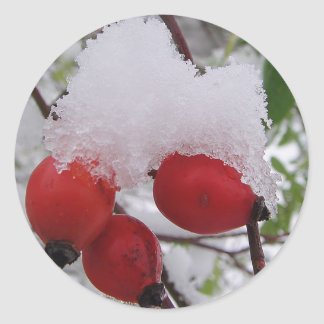 Three rosehips with snow round sticker