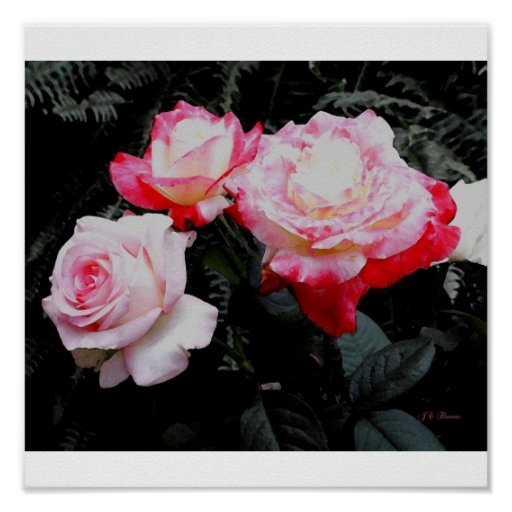 Three Roses Postage Posters
