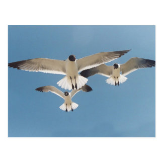 Three Seagulls Postcard