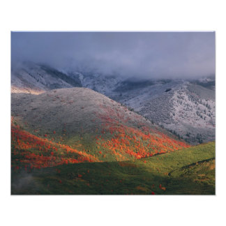 Three seasons of foliage red maples and fall art photo