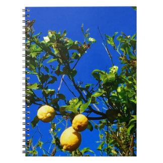 Three Sicilian Lemons Notebooks