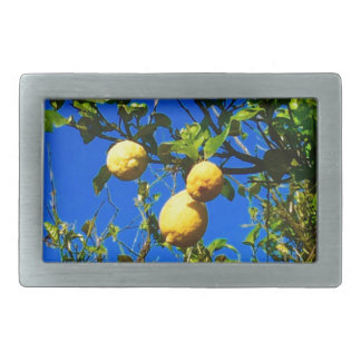 Three Sicilian Lemons Rectangular Belt Buckle