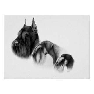 Three sizes of schnauzers POSTER