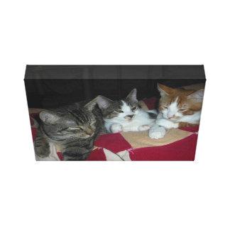 Three sleepy cats gallery wrap canvas
