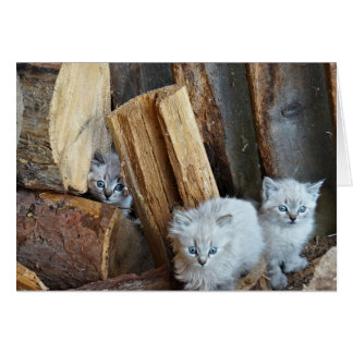 Three small kittens in the wood shed card