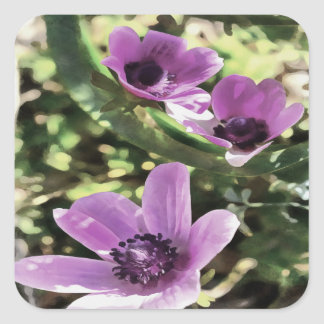 Three Spring Anemone Flowers Square Sticker
