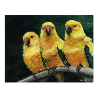 """Three Sun Conures"" Bird Art Postcard"