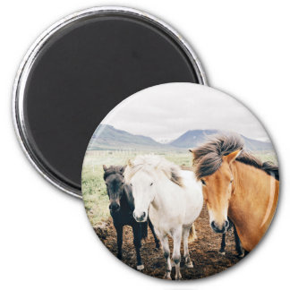Three Themed, Iceland  Brown, White And Black Hors 6 Cm Round Magnet