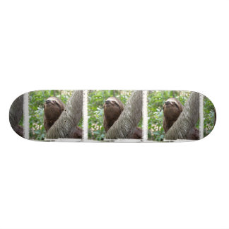 Three Toed  Sloth Skateboard