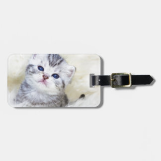 Three weeks old young cat sitting on sheep fur luggage tag